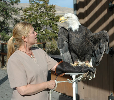 Bald Eagle in the Raptor Interpretive Program