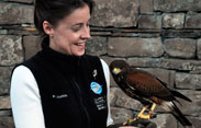 Educational-Tours-Gray-Raptor-Program-1