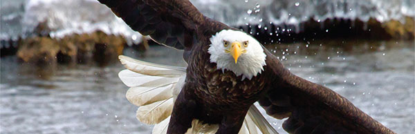 Eagle Watch @ The Dalles Lock & Dam Visitor Center | The Dalles | Oregon | United States