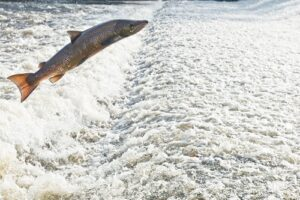 Fish Tales: PLEASE NOTE TIME CHANGE @ Columbia Gorge Discovery Center