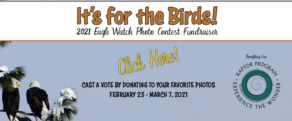 CGDC eagle watch photo contest voting