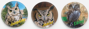 International Owl Day Pins Columbia Gorge Discovery Center and Museum