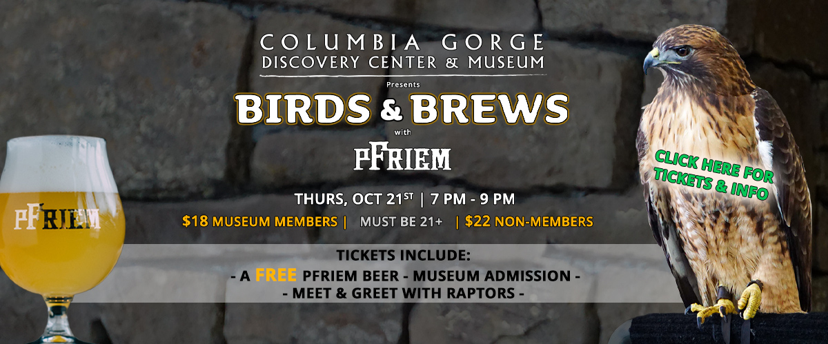 columbia gorge discovery center birds and brews after hours raptor event with pfriem slider